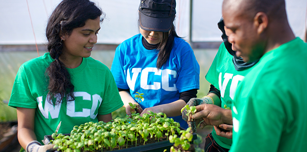 Students in WCC T-shirts work in a greenhouse